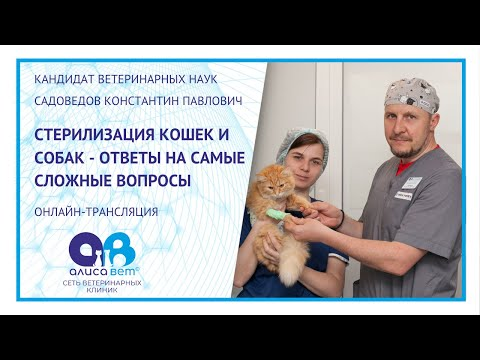 Стерилизация кошек и собак (вебинар)
