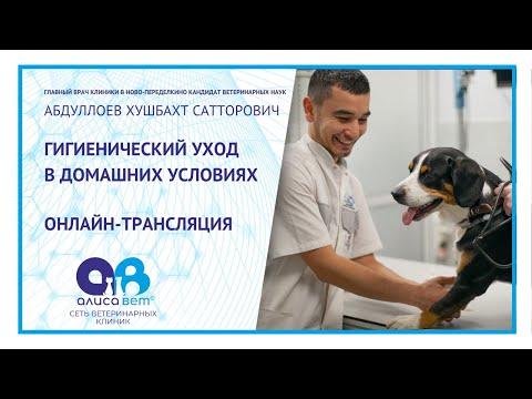 Гигиенический уход за кошкой и собакой в домашних условиях