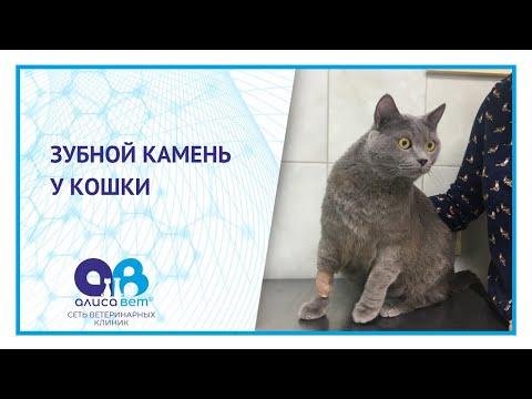 Зубной камень у кошек что делать - 1 верное решение
