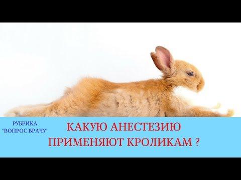 09.03.18 Анестезия кроликов. Ингаляционный (газовый) наркоз