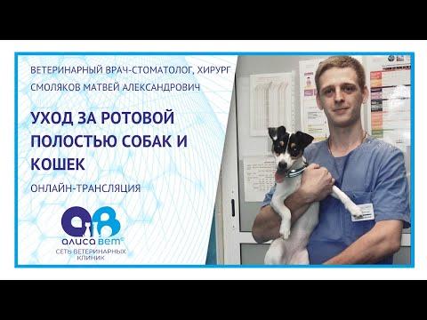 Как чистить зубы собаке и кошке (вебинар)