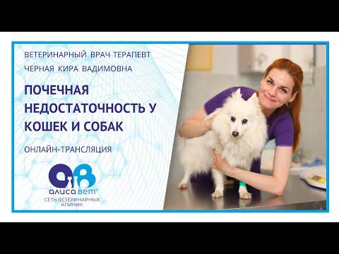 Почечная недостаточность у кошек и собак (вебинар)
