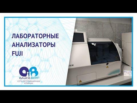 """Биохимический анализатор FUJI DRI-CHEM NX500 в ветеринарной клинике """"Алисавет"""""""