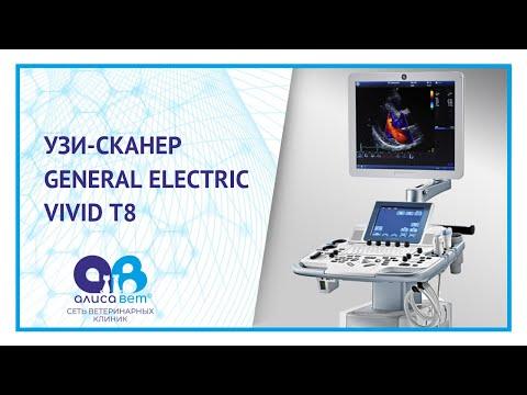 УЗИ-сканер Vivid-8 General Electric в ветеринарной клинике