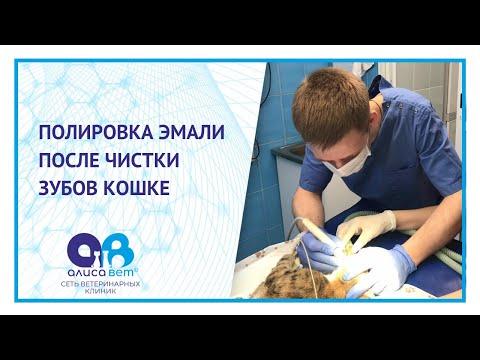 Полировка эмали после чистки зубов кошке
