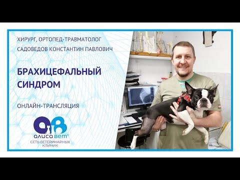 Брахицефалический синдром у собак