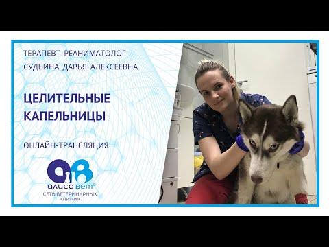 Капельница собаке и кошке (вебинар)