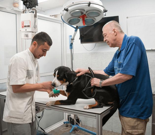 Veterinar-ortoped