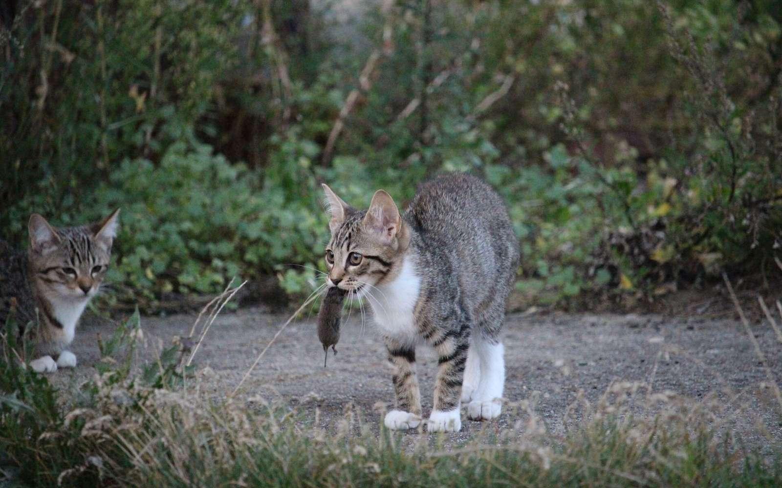 Как кошки чистят зубы сами