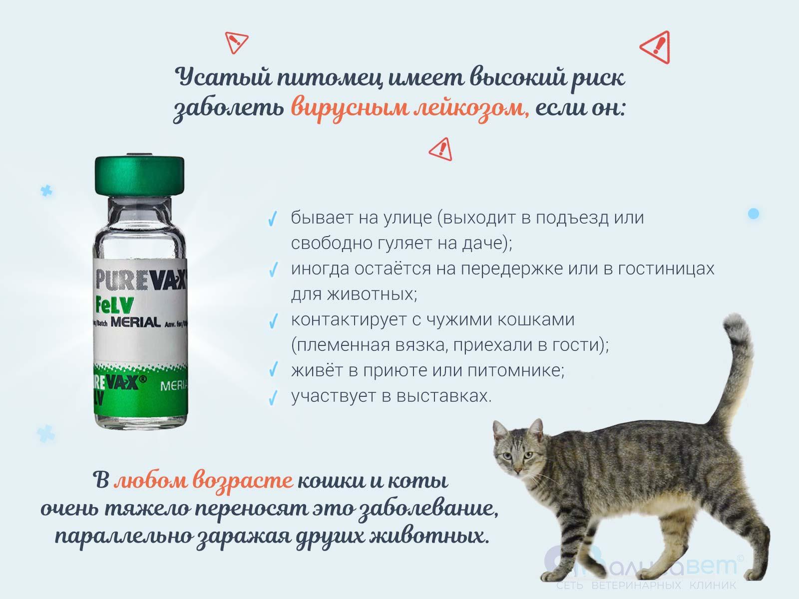 Прививка кошки от лейкоза