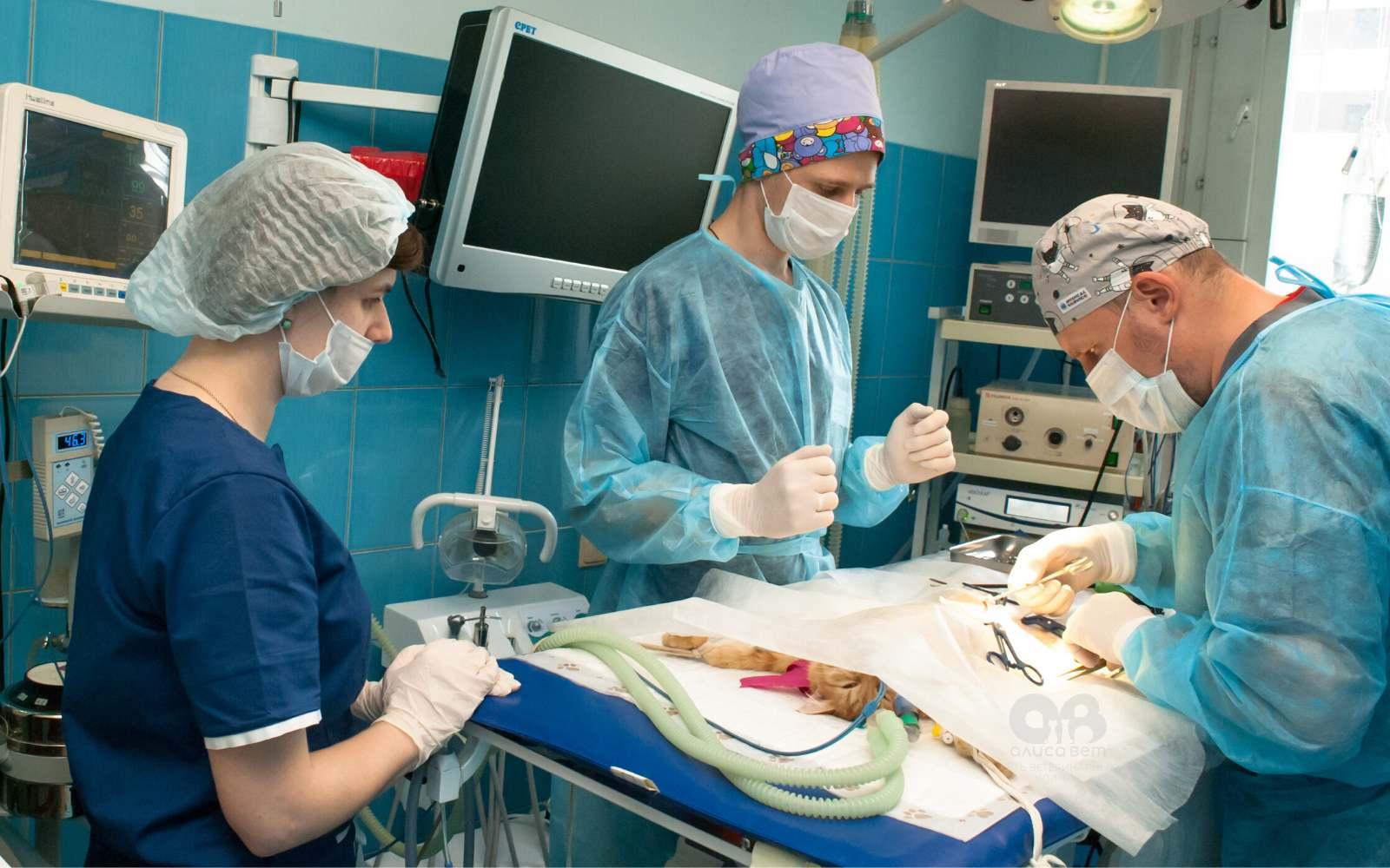 Стерилизация кошки косметический шов операция