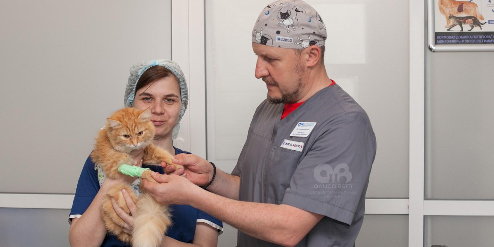 Стерилизация кошки косметический шов с попоной