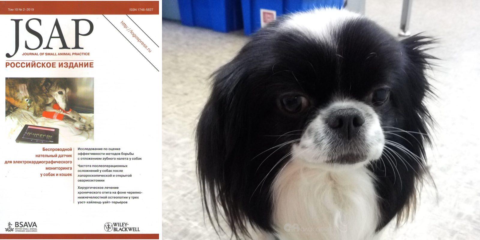 Стерилизация собак виды и методы стерилизации