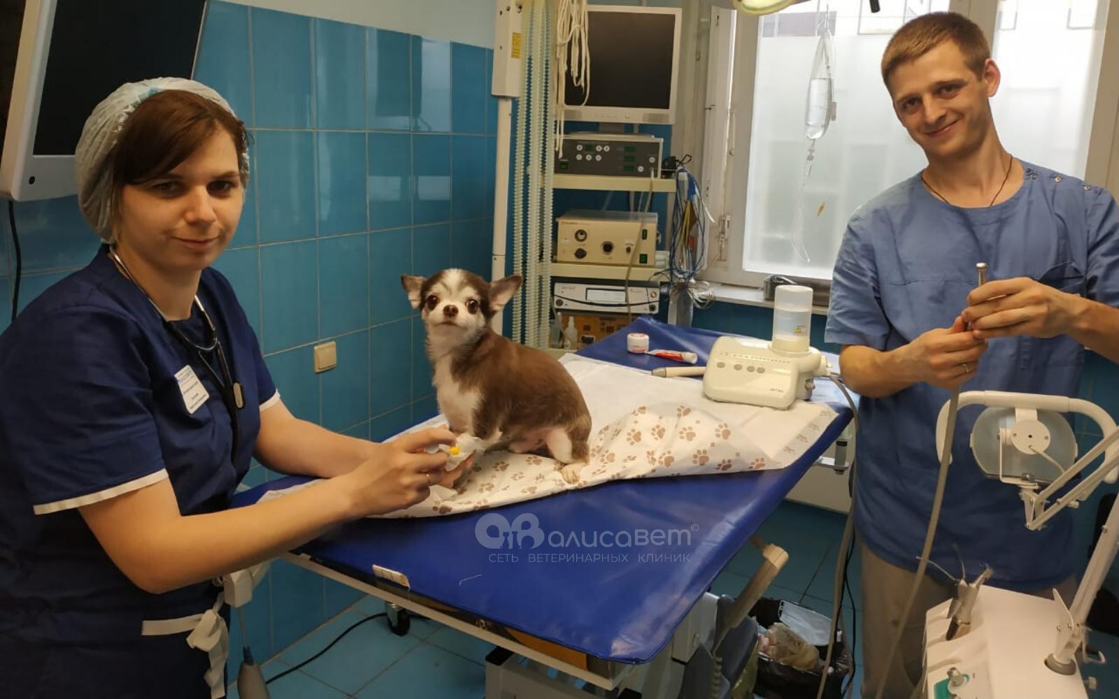 Стоматолог для собак