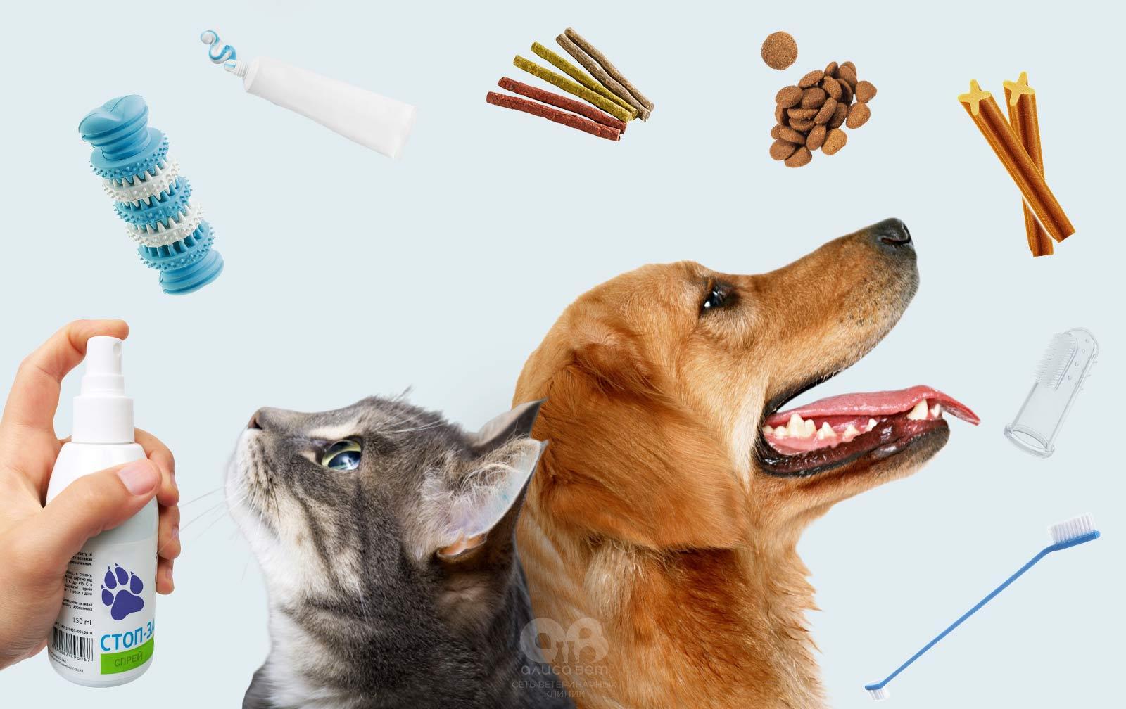 Уход за зубами собаки и кошки в домашних условиях