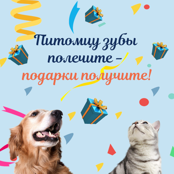 Чистка зубов собаке и кошке в ветклинике