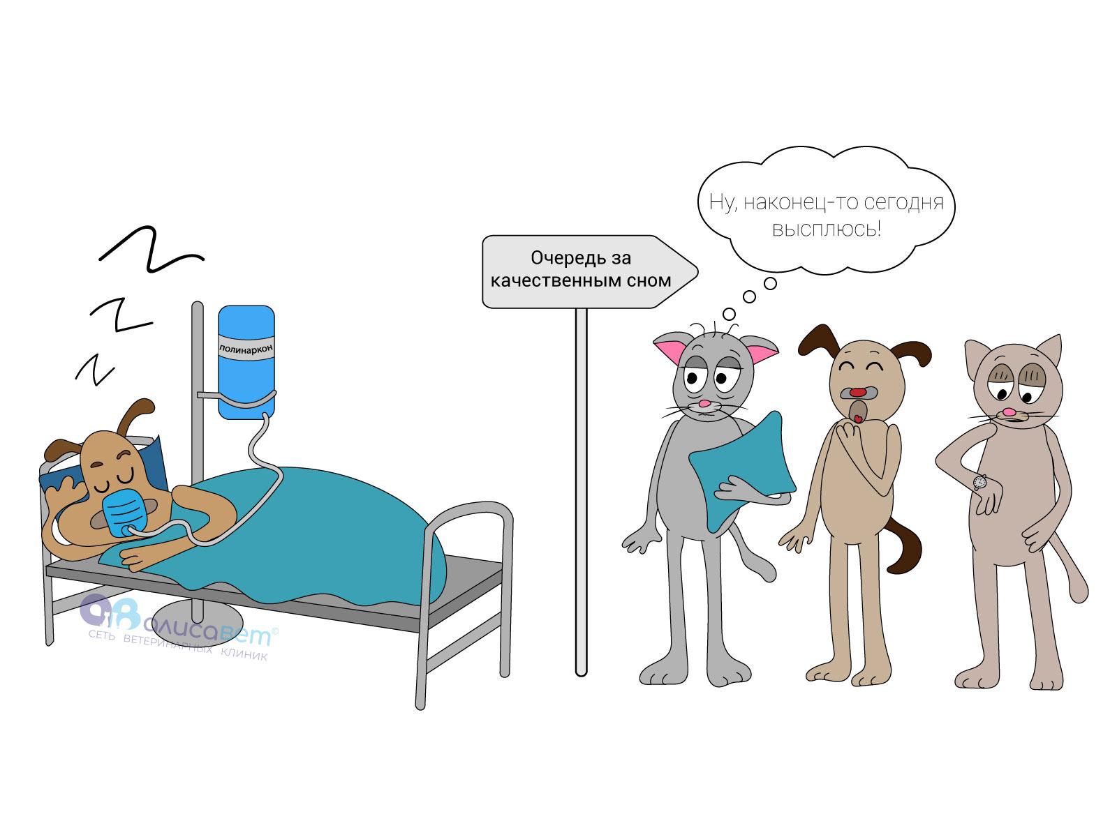 Ингаляционная анестезия для кошек