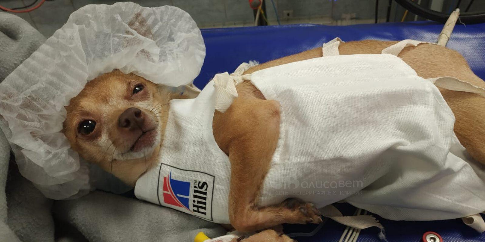 Ингаляционная анестезия для собаки