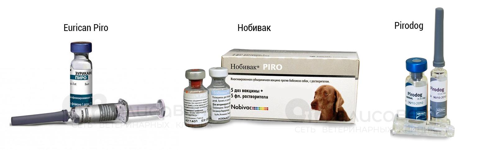 Вакцинация от пироплазмоза собак