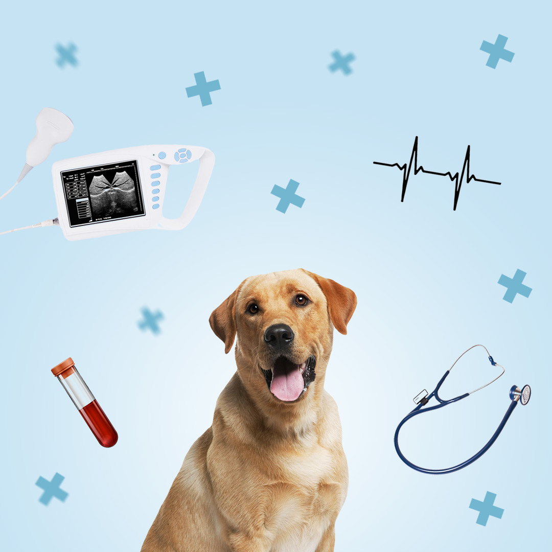 Обследование собаки перед операцией