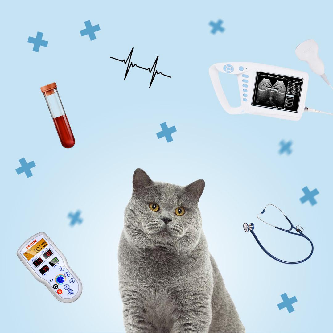 Обследование кошки перед операцией