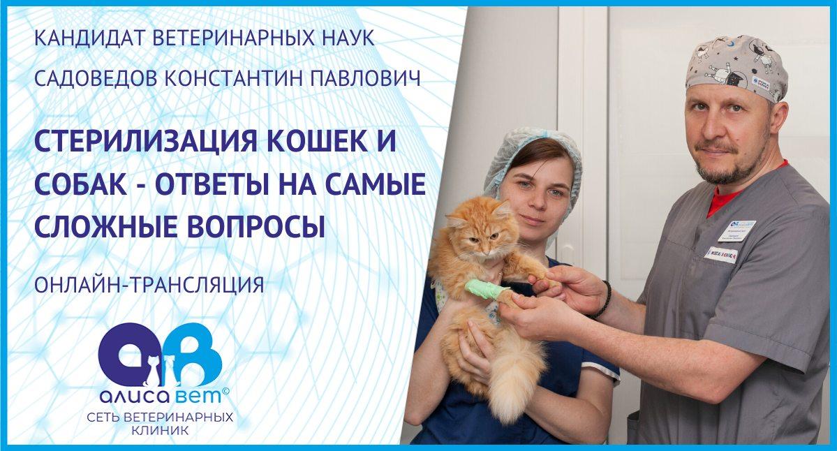 Запись вебинара про стерилизацию собак и кошек от 21.04.20