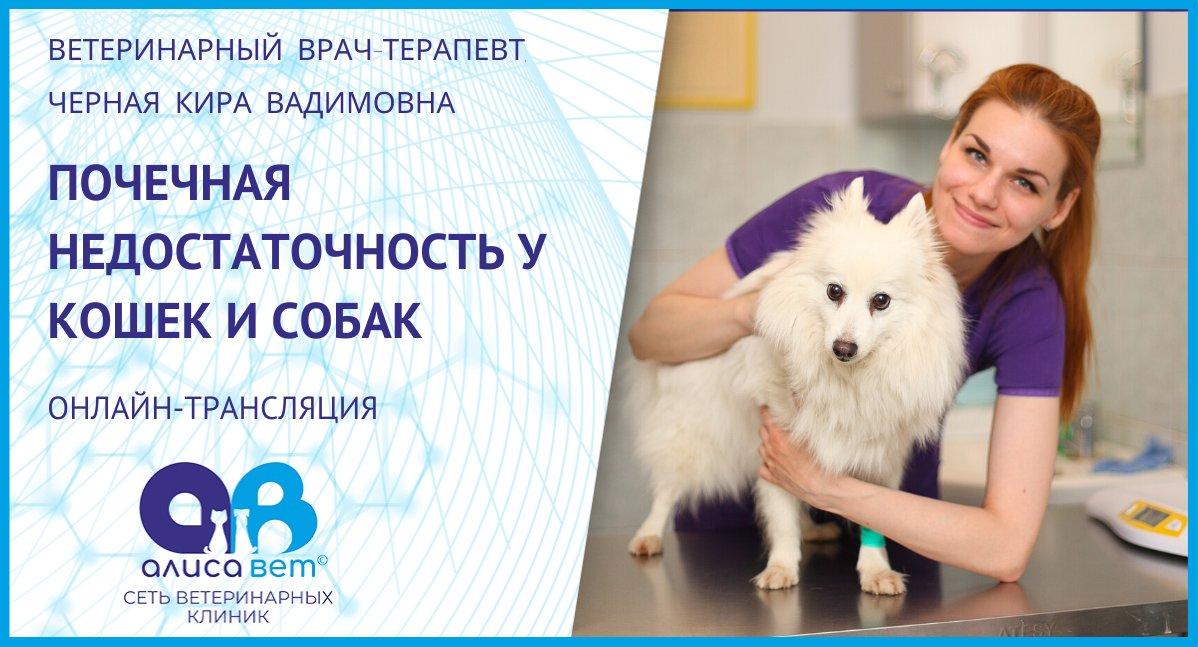 Почечная недостаточность у собаки и кошки
