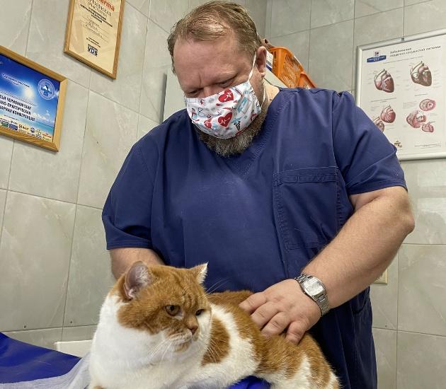 гемодиализ кошке