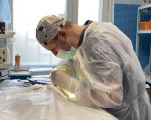 стерилизация кошки скидка