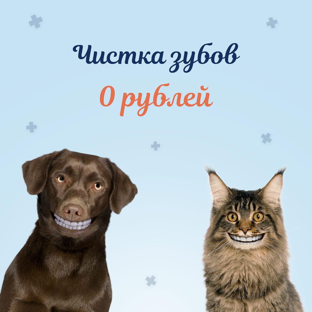 чистка зубов собаке и кошке бесплатно