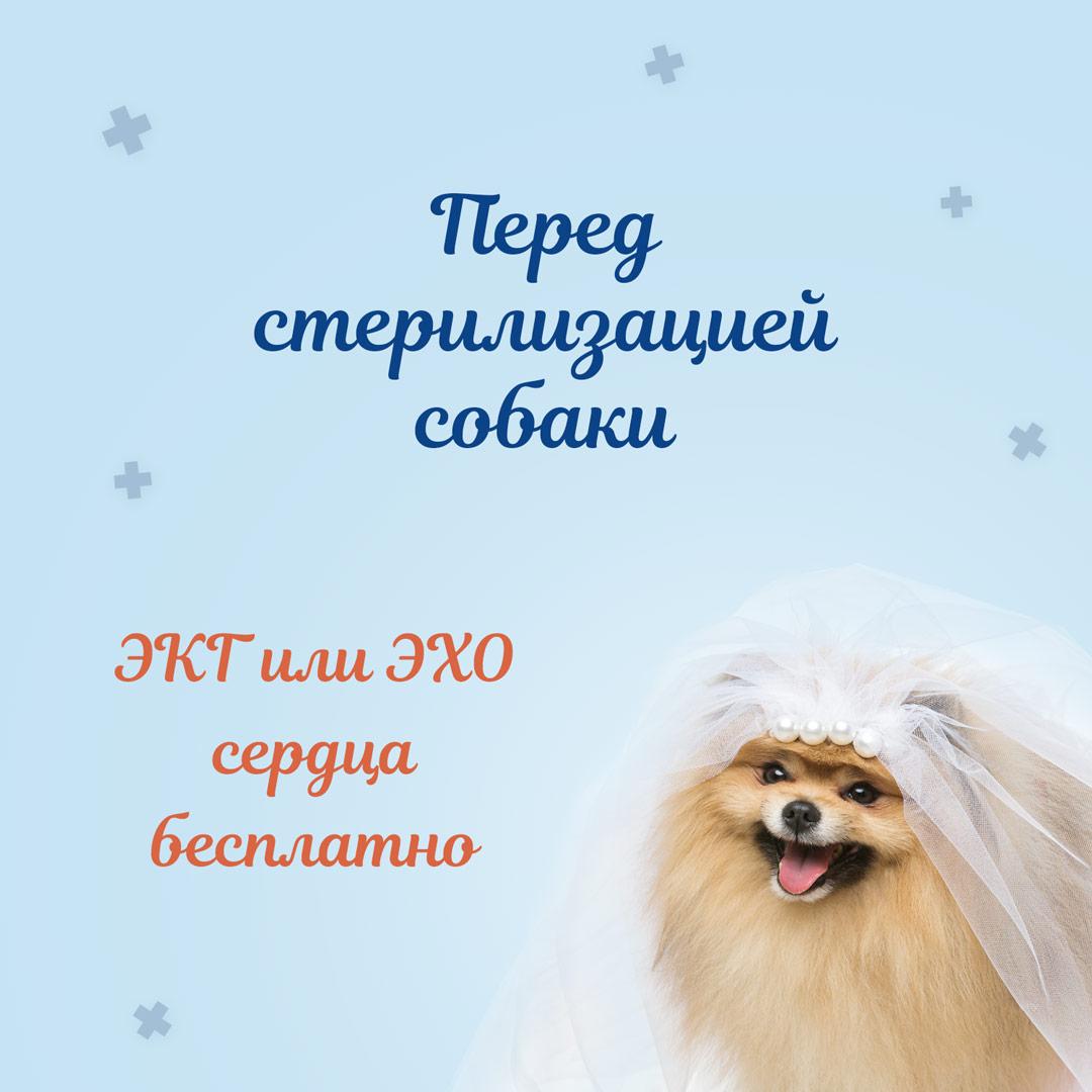 эхо сердца собаке