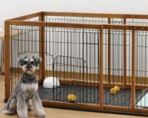 разрыв крестообразной связки у собак лечение в домашних условиях