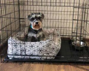 разрыв крестообразной связки у собаки лечение в домашних условиях