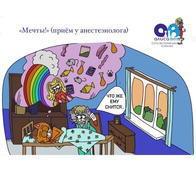 ветеринар анестезиолог